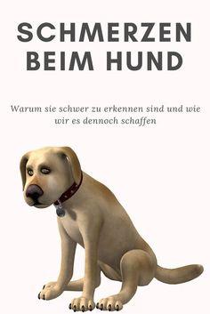 Schmerzen beim Hund - wie kann ich sie erkennen?