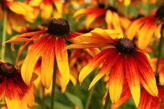 Kuvia neljästä vuodenajasta Dandelion, Flowers, Plants, Dandelions, Plant, Taraxacum Officinale, Royal Icing Flowers, Flower, Florals