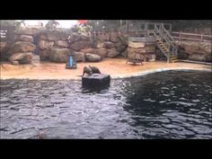 Lego Floater w/Fish Sea Lion Enrichment - YouTube
