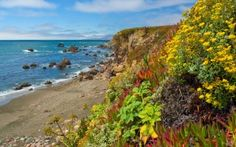Preview wallpaper flowers, vegetation, coast, beach, stones, clearly, horizon
