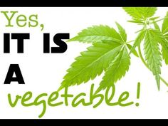 Most Nutritional Vegetable In The World is Cannabis! - YouTube