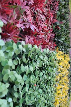 #Muros #Verdes #Exterior #Jardin