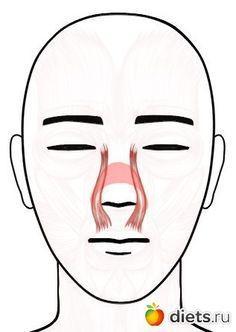 """Сохраняем юную форму носа: упражнение """"Курносик"""": Фейскультура: методы естественного омоложения: Группы - diets.ru"""