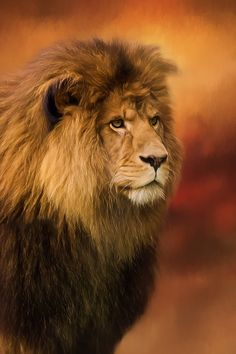 Lion Legacy - Lion Art by Jordan Blackstone #lion #jordanblackstone #wildlife