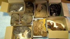Crazy cat lady closet organizing. How to organize your cats. pic.twitter.com/XmlZcz0i2t