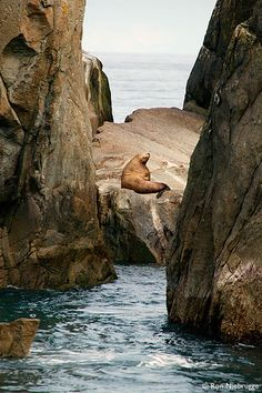 Steller Sea Lion Photos, Pictures of Kenai Fjords National Park, Alaska