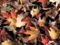 Kinderliedje met beeld: over de herfst en kastanjes.