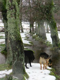 Branda da Aveleira, Parque Nacional da Peneda do Gerês - Portugal - Snow Day & Dogs