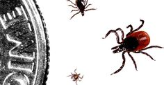 Beware hikers, turkey hunters, and other brush-country and wilderness travelers: Black-legged tick season is here, and the tiny bloodsuckers are looking for a host.