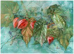 Physalis and begonia by kosharik69 on DeviantArt