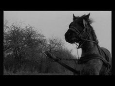 The Turin Horse Trailer from Hungarian director Bela Tarr: based on the story of Nietzsche saving the horse that was being beat and what happened to the horse afterwards.