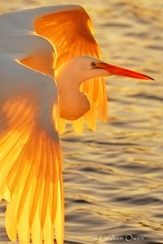 egret. By Brenda Baker
