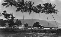 The Esplanade, Cairns, 1922 - John Oxley Library, State Library of Queensland, Neg 200071