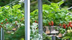 Huerta en casa: ¿qué plantar?