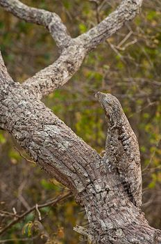 Masters of Disguise – Camouflaged Animals   Amazing Things - Part 2