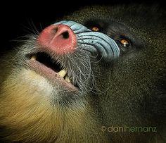seriously bro baboon