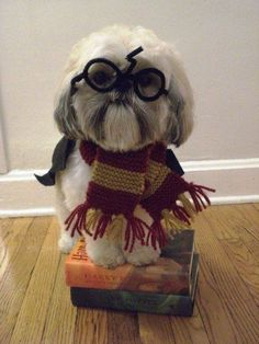 Harry Potter Shih Tzu this needs to happen. You're furry Harry. Harry Potter Pets, Harry Potter Dog Costume, Costume Chien, Chien Halloween, Dog Halloween, Halloween Books, Happy Halloween, Funny Animals, Cute Animals