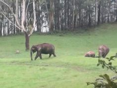 The Elephant spotted at Mattupetty - Munnar on Munnar, Kerala, Insight, Elephant, Tours, Horses, Animals, Animales, Animaux