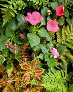 impatiens, autumn fern, coleus