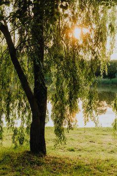 Green Trees Beside Lake · Free Stock Photo Adobe Photoshop Lightroom, Green Trees, Free Stock Photos, Royalty Free Images, Sunset, Landscape, Plants, Scenery, Sunsets