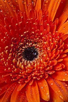 ✯ Orange Mum