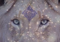 Energy Report Update ~ The Lion's Gateway & Portal = Open! Ascension Symptoms, O Portal, Lions Gate, States Of Consciousness, Pyramids Of Giza, The Eighth Day, Star Sky, Months In A Year, Beautiful Soul