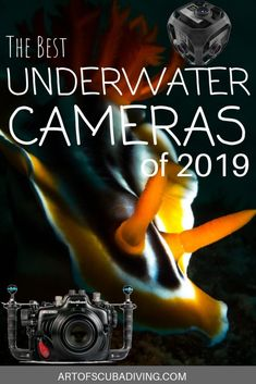 The Best Dive Cameras for 2019 - Art of Scuba Diving