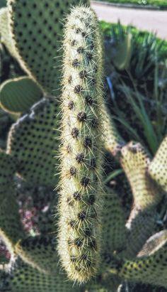 Cactus-self-defence