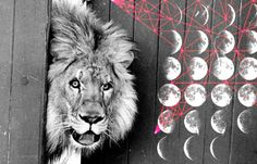 Find Your Fierce: 8 Tips for the Leo New Moon | Astrostyle: Where Astrology Meets Love, Relationships, Career, Money, Fashion, Celebrities a... - See more at: http://astrostyle.com/leo-new-moon/#sthash.JOaJ2NMZ.dpuf