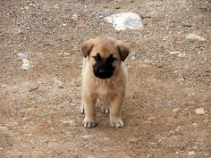 We will have a #kangal a day in the future :)