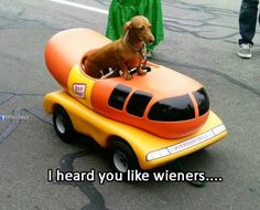 Weiner dog weiner mobile… ...........click here to find out more http://googydog.com