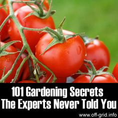 Please Share This Page: 101 Gardening Secrets The Experts Never Tell You – Image To Repin / ShareImage – © etiennevoss – fotolia.com We discovered a fantastic list of gardening tips will surely turn up something new, even for experienced gardeners! If you're new to gardening, taking the first steps often produces mixed results and [...]