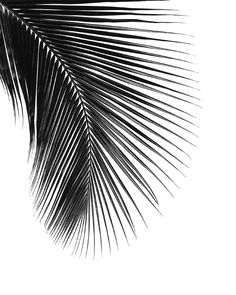 Palm leaf Art Print by NORDIK                                                                                                                                                                                 Mais