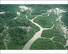 BORNEO - Aerial of Mangrove Forest byArdea Wildlife Pets Mangrove Forest, Forest Art, Tropical Forest, Borneo, Holiday Destinations, Aerial View, Science Nature, Wildlife, Photographic Prints