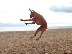 Boris just loves to jump: )
