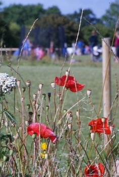 Pitchperfect through the poppies