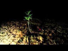 Moringa Tree Of Miracles PLOTTPALMTREESCOM (playlist) BUY FROM OUR WEBSITE: http://plottpalmtree.miiduu.com/health-care