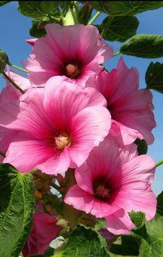 Landscaping hot pink flowers pink flower art pink flower painting p Pink Flower Bouquet, Hot Pink Flowers, Hibiscus Flowers, Flowers Nature, Pretty Flowers, Blush Flowers, Dark Flowers, Gift Flowers, Flower Diy