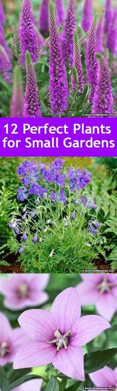 1000 ideas about small gardens on pinterest gardening for Plants for small gardens