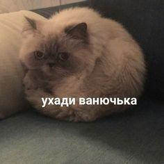 Memes Funny Faces, Cartoon Memes, Stupid Memes, Animal Memes, Funny Animals, Cute Animals, Hello Memes, Russian Memes, Funny Mems