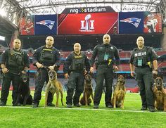 """frogdogk9: """"The real MVPs of the game. Happy Super Bowl & stay..."""