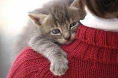 Gatos locos por recibir a sus amos cuando regresan a casa