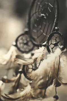 ✯ Dreamcatcher Shadows ✯