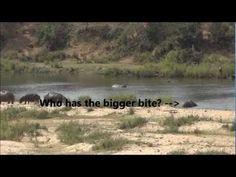 Kruger - Drive from Mopani to Tamboti - YouTube