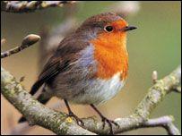 winterbirds - Google zoeken
