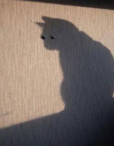 run it's the shadow kitty!