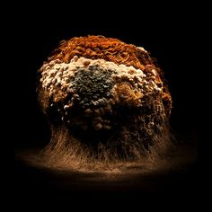 Heikki Leis was born in Tartu, Estonia, and has lived and worked in the same town for the better part of his life. He has been working as a freelance artist since 2000 and an avid photographer since 2004. These macro photographs of decaying vegetables are from his series, Afterlife.