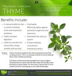 Benefits of Thyme. helps stop epilepsy Healing Herbs, Medicinal Herbs, Natural Healing, Natural Health Remedies, Herbal Remedies, Natural Cures, Natural Medicine, Herbal Medicine, Health Benefits Of Thyme