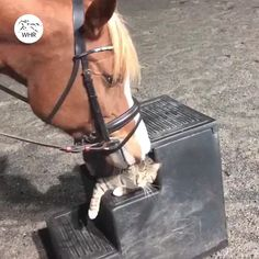 Horse and kitty buddy - Tiere Cute Funny Animals, Cute Baby Animals, Animals And Pets, Cute Cats, Funny Cats, Cute Animal Videos, Funny Animal Pictures, Funny Horse Videos, Cute Creatures