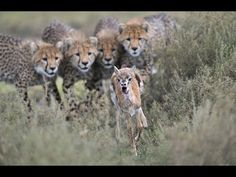 Horrible Wild Life Animals in Africa. Animals killing Animals Caught in Action. Watch This Awesome Video.